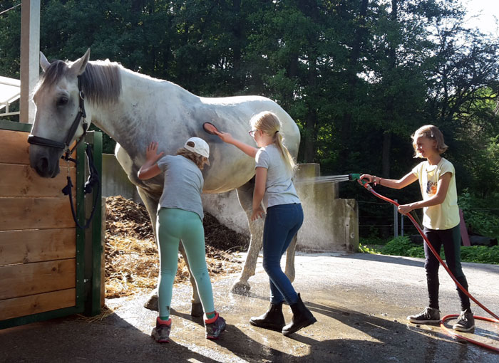 Pferdepflege auf der Sommersportwoche am Hammerwiesenhof