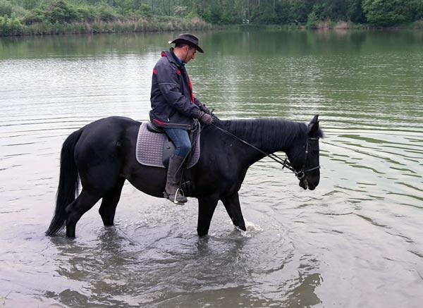 Ausreiten zum See und Reiten im Wasser