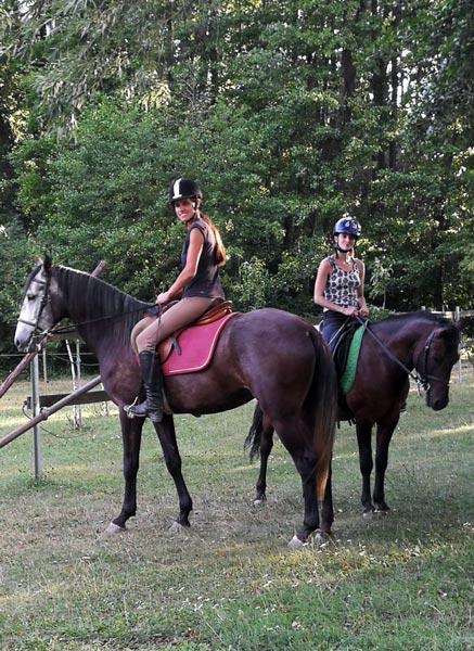 Jaqueta und Goral, unsere beiden jungen Pferde vor dem Training am Hammerwiesenhof