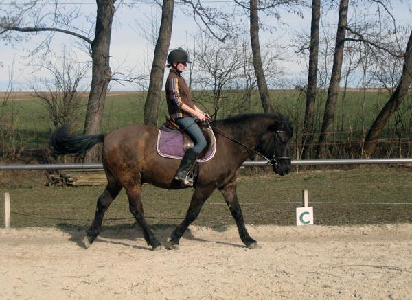 Alina mit dem Huzulen Peppino beim Dressurtraining am Hammerwiesenhof