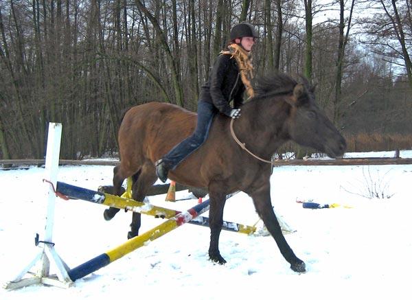 Alina mit dem Huzulen Peppino beim Springen mit Halsring am Hammerwiesenhof